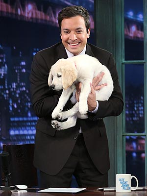 English Cream Golden Retriever finds a home with Jimmy Fallon