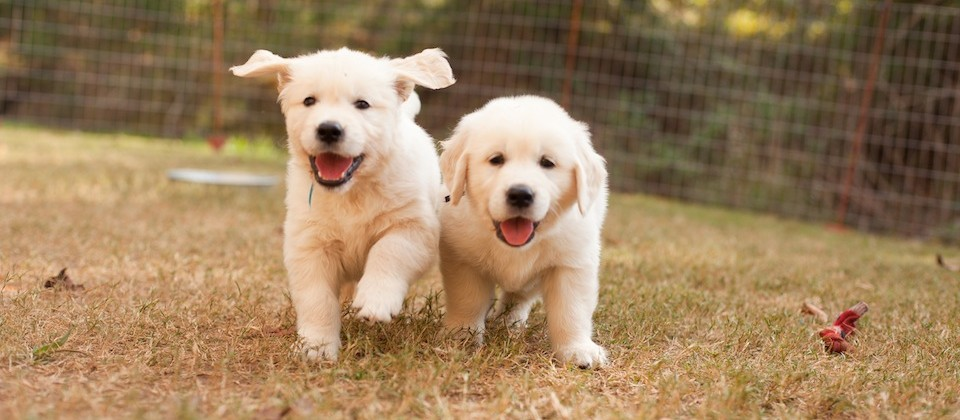 Puppies Running towards you
